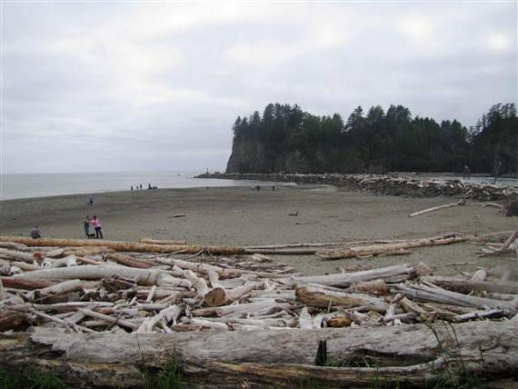 Tree Graveyard - Rialto Beach - La Push Washington - Atlas Obscura Best of