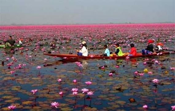 Lotus Lake - Udon Thani, Thailand - Best of Atlas Obscura Places