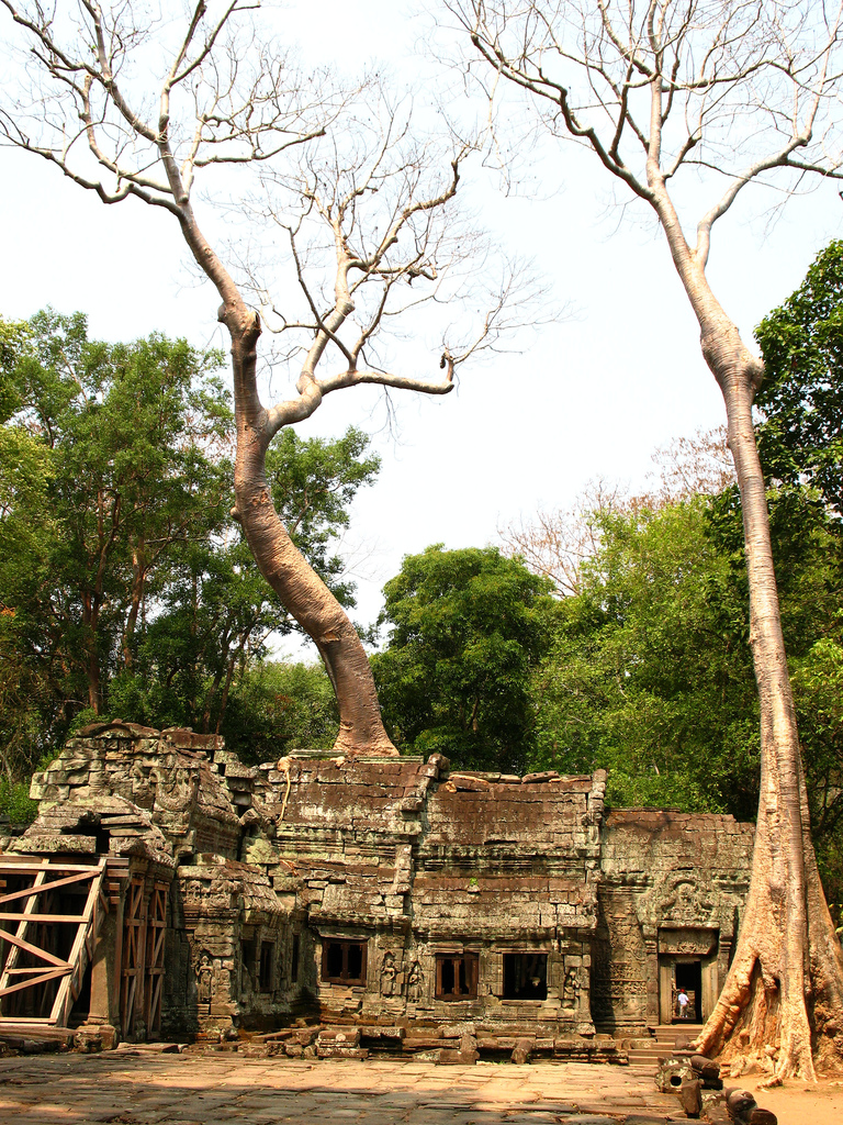 Angkor Ta Prohm - Travel Blog at Atlas Obscura