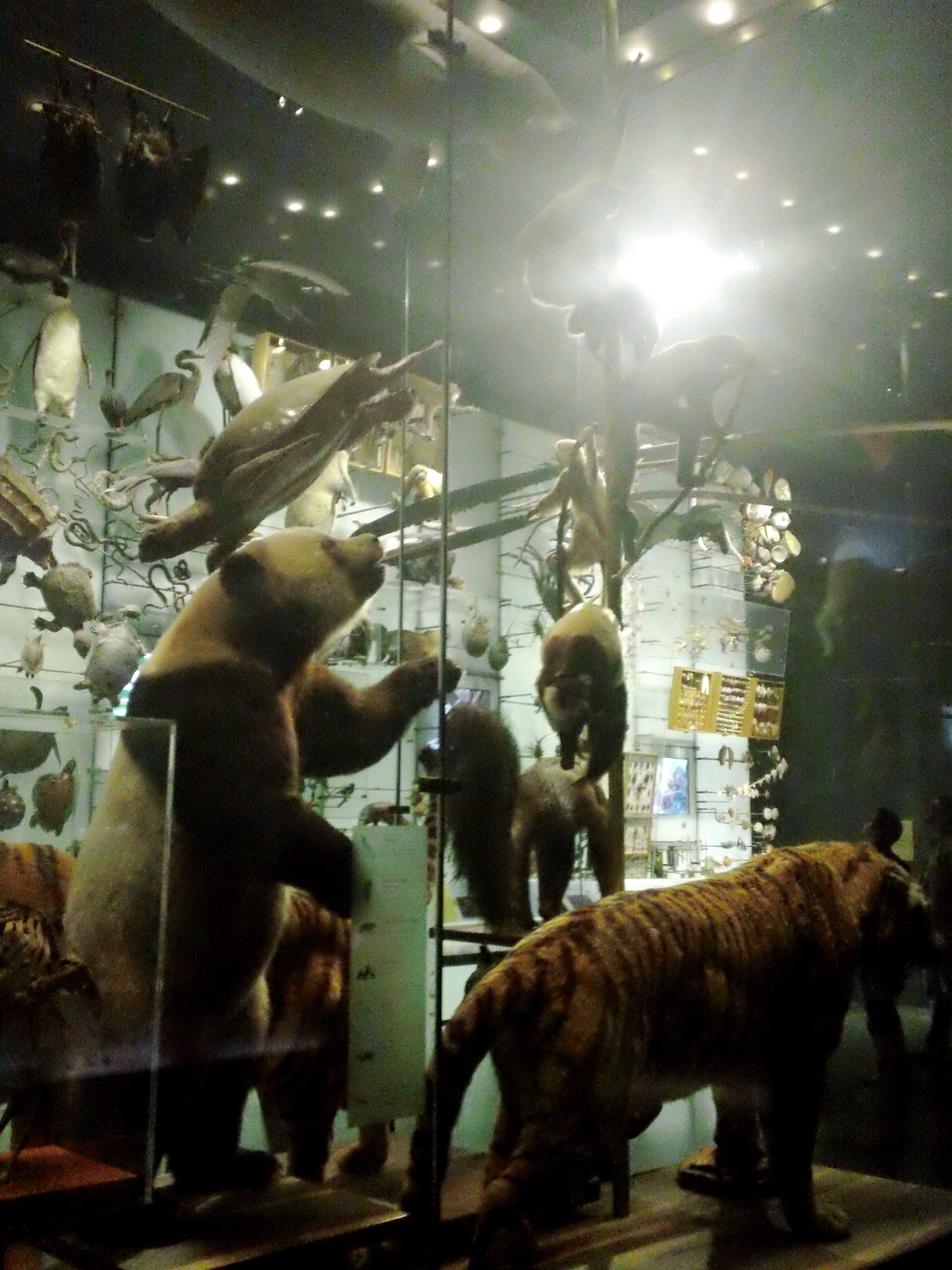 Animal Battle Royale - Atlas Obscura - Natural History Museum NYC