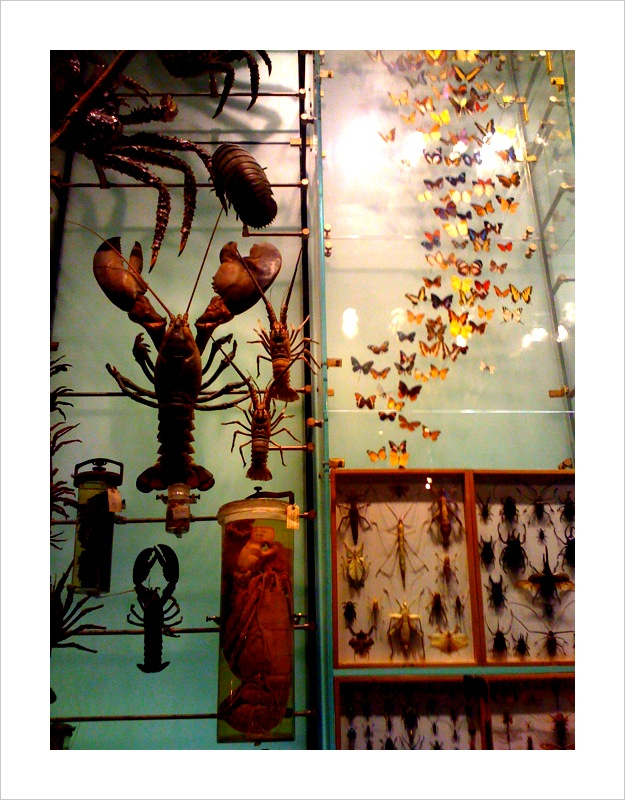 Butterfly Pinned Specimens - Pickled Lobsters in Jars - American Museum of Nat'l Hist