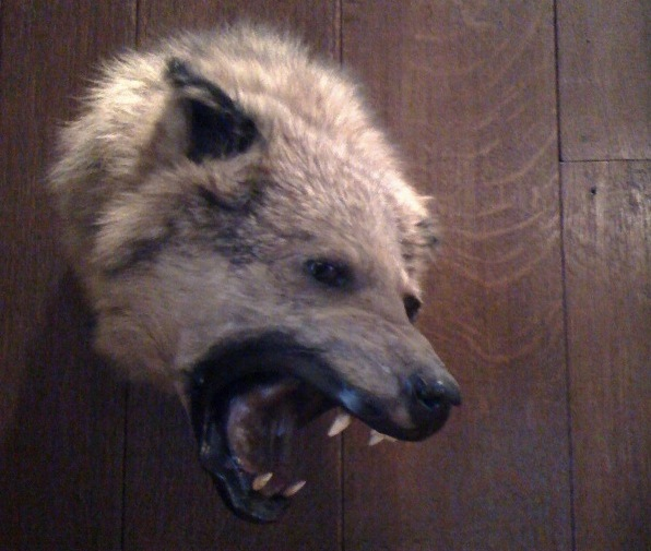 Angry Hyena - Ferocious Taxidermy - Explorers Club - Atlas Obscura