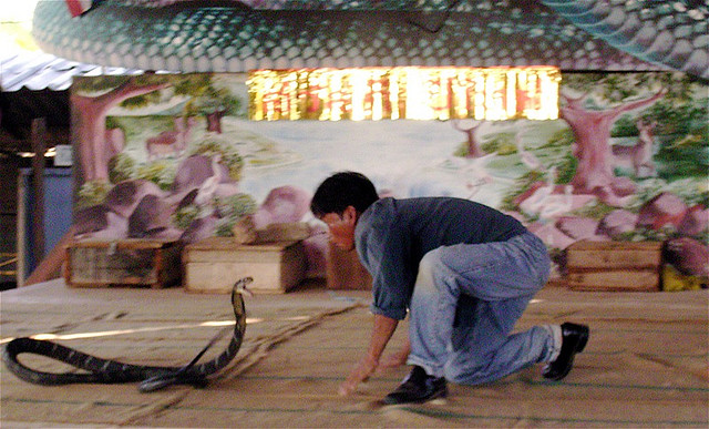 Cobra Fight - Snake Boxer - Thailand Snake Boxing - Atlas Obscura Blog