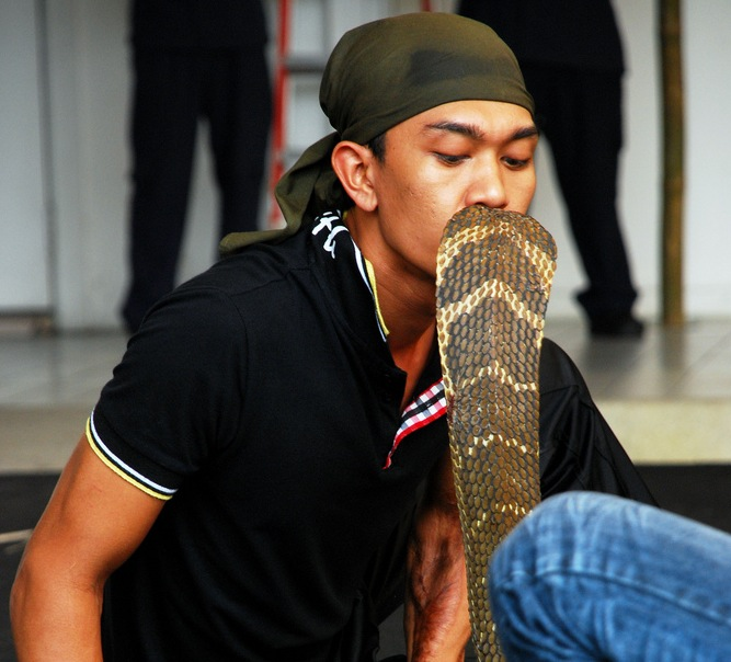 King Cobra Kiss - Thai Snake Fights - Atlas Obscura Blog - First-hand Thailand