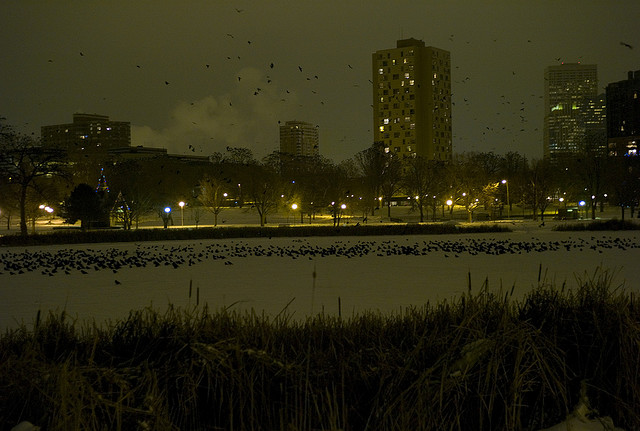 Crows Roosting for the Winter - Loring Lake - Minneapolis MN - Atlas Obscura