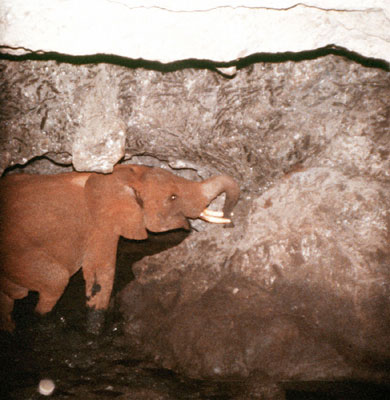Kitum Cave - Elephants Licking Salt - Atlas Obscura Blog